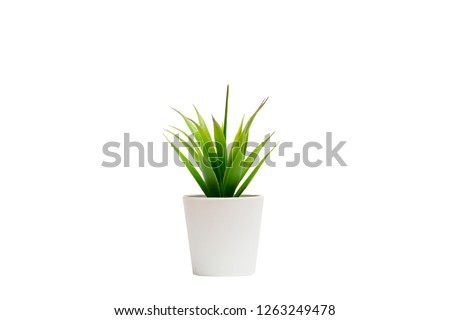 Indoor small green plant #1263249478