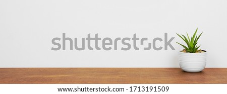 Indoor succulent plant in a white pot. Side view on wood shelf against a white wall. Banner with copy space.