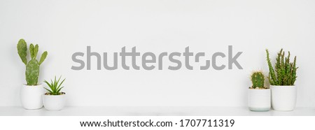 Indoor succulent plants and cacti on a shelf. White shelf and wall. Banner with copy space.