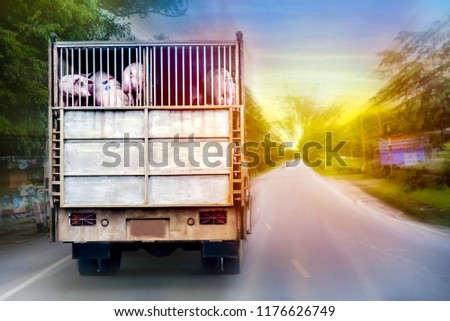 Industrial Business. Transporting pigs. #1176626749