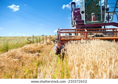 industrial vintage harvesting machinery in wheat crops. Rural agriculture and farming with vintage machines
