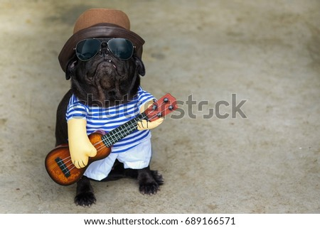 Indy Musician Guitarist pug dog.(Funny pug dog wearing indy musician costume with Ukulele.)