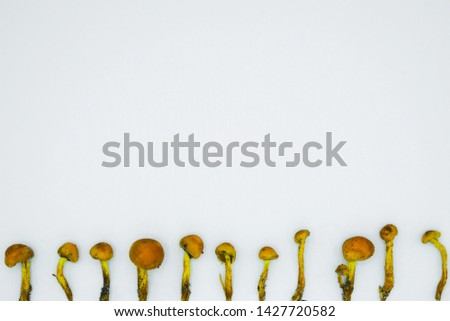 Inedible mushrooms on thin legs lined up. White background. Minimalism. Copy space.