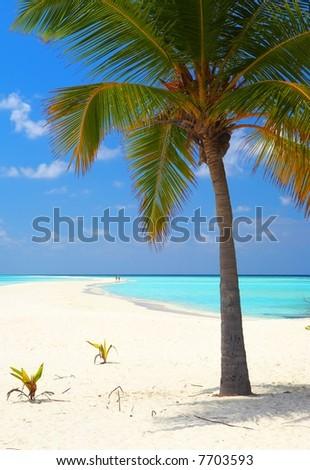 Infinity tropical beach on the island Kuredu in the Indian Ocean, Maldives