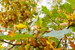 influence and impact of the autumn season on nature on the example of trees or other plants closeup, changes in the appearance of plants under the influence of natural phenomena