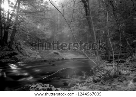 Infrared Light Penetrating Foggy Autumn Forest Highlighting Trees And Stream, Infrared Photography In Black And White