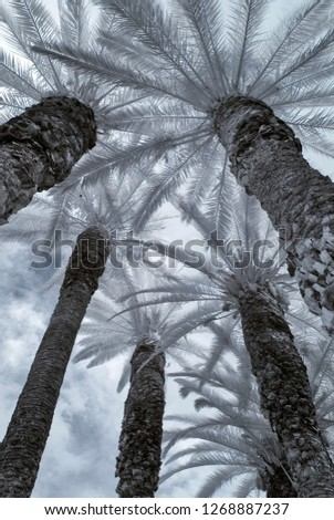 infrared palm trees from bottom with blue sky
