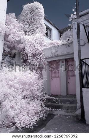 infrared photo photography tree photo amazing city street home door