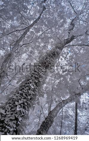 infrared photo photography tree photo amazing nature
