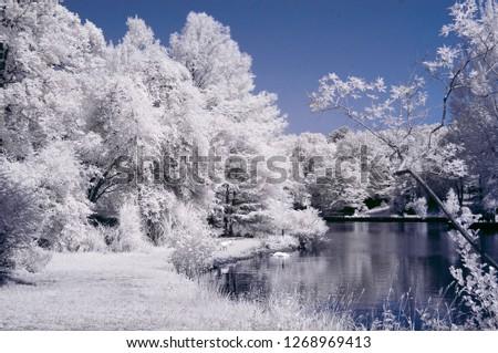 infrared photo photography tree photo amazing nature lake reflection