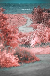 Infrared photo.view of the shore of the Baltic Sea.