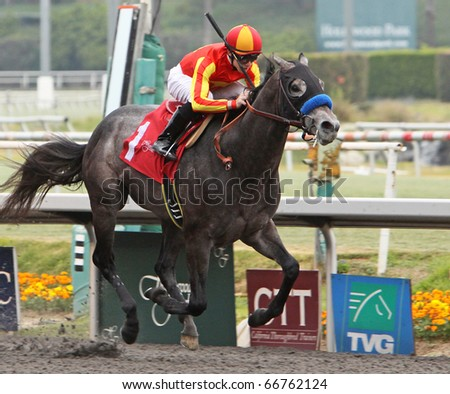 INGLEWOOD, CA - DEC 5: Two-year-old colt, Free Pourin, wins his first race under jockey Joe Talamo at Hollywood Park on Dec 5, 2010 in Inglewood, CA.