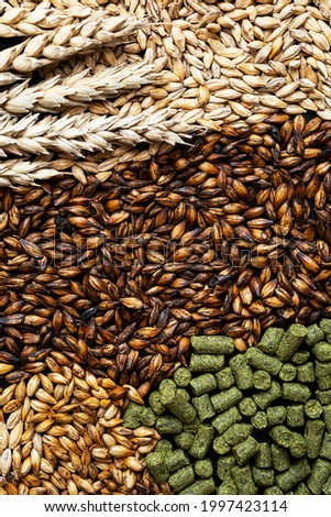 Ingredients for brewers. Pale ale, chocolate and caramel malt grains, green hops and wheat ears, close-up. Craft beer brewing from grain barley malt. Stock photo ©