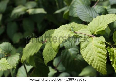 innisfree nature leaf, nature leaf, jeju island #1389755093