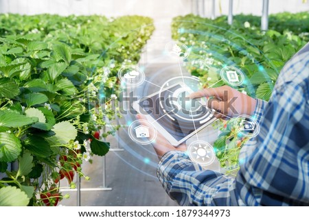 Innovation technology for smart farm system, Agriculture management, Hand holding smartphone with smart technology concept. asian male farmer working in Strawberry farm To collect data to study. Stock photo ©