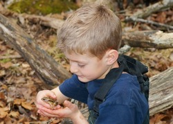 Inquisitive boy in muddy waders holding a frog - Pickerel Frog, Lithobates palustris