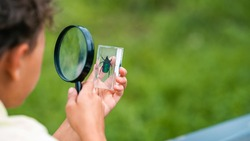 inquisitive elementary school boy studies beetle through magnifying glass in outdoor Park. examines insects in classroom with magnifying glass. Research, thirst for new knowledge. Back to school.