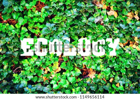 Inscription, Ecology on a background of green leaves. The concept of pure nature. Fighting pollution. #1149656114