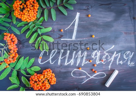 """Inscription in Russian """"September 1"""" with Rowanberry leaves and berries on a wooden background. Greeting gift card for the day of knowledge. Hand lettering. #690853804"""