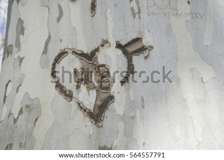 Inscription of love in a tree in the royal gardens of the palace of aranjuez in madrid, spain
