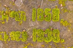 inscriptions on an old grave overgrown with moss, a tombstone, an old cemetery
