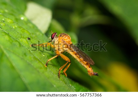 Insect #567757366