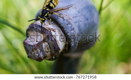 insect arthropod beetle #767271958