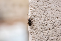 Insect, beetle crawling on a stone wall, insects in the summer