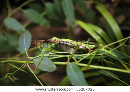 insect camouflage on plants-1