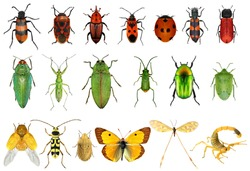 Insect color diversity (red, green, yellow)