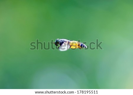 Insect flight #178195511