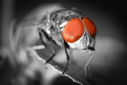 insect fly eye macro