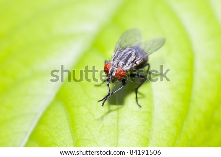 insect fly macro on leaf