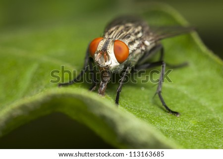 insect fly macro shot close-up #113163685