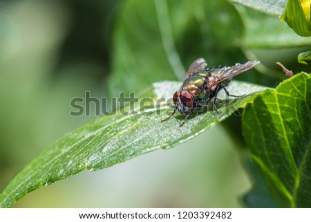 insect fly on on green leaf #1203392482