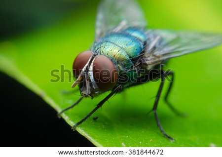insect fly on on green leaf. fly house. #381844672
