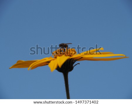 Insect fly sitting on a bright yellow flower background clear sky close-up. Colorful picture for decoration.
