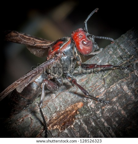 insect hornet wasp rest on trunk