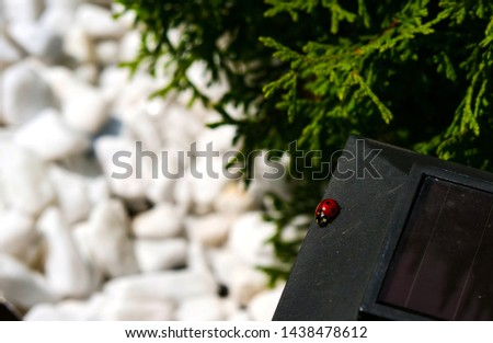 Insect, ladybug, picture with this cute creature is sure to take you to childhood , when holding a ladybug on his hand you asked to bring her bread, high-resolution picture can be set as a s