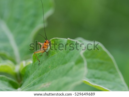 Insect on the leaf #529649689