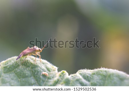 Insect perched on a leaf in a macro picture.