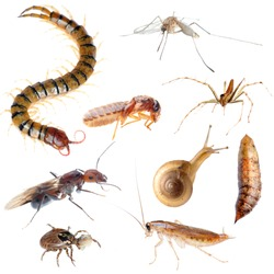 insect pest bug set collection isolated