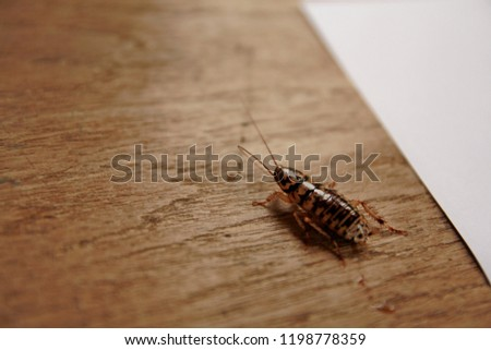 Insect pests gnawing rotten food. #1198778359