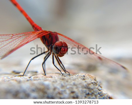 Insect photography in nature Beach - desert - mountains #1393278713