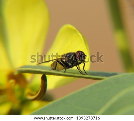 Insect photography in nature Beach - desert - mountains #1393278716