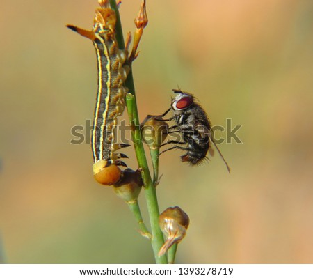 Insect photography in nature Beach - desert - mountains #1393278719