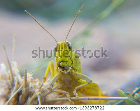 Insect photography in nature Beach - desert - mountains #1393278722