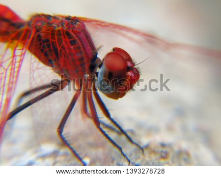 Insect photography in nature Beach - desert - mountains #1393278728