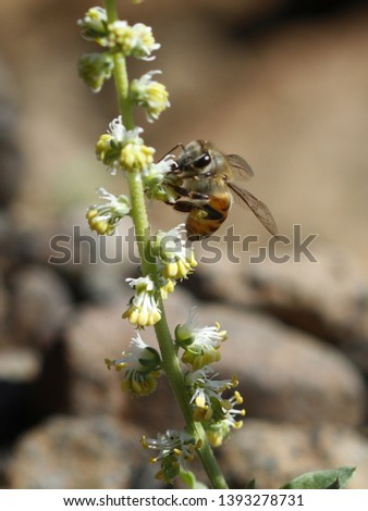 Insect photography in nature Beach - desert - mountains #1393278731