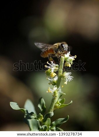 Insect photography in nature Beach - desert - mountains #1393278734